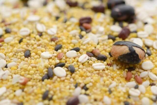 雑穀ごまのリグナンは美容と健康に効果的なフィトエストロゲン